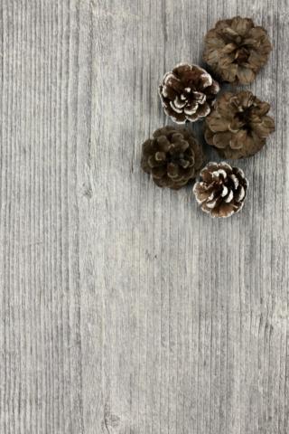 flatlay fir cones pine wood winter