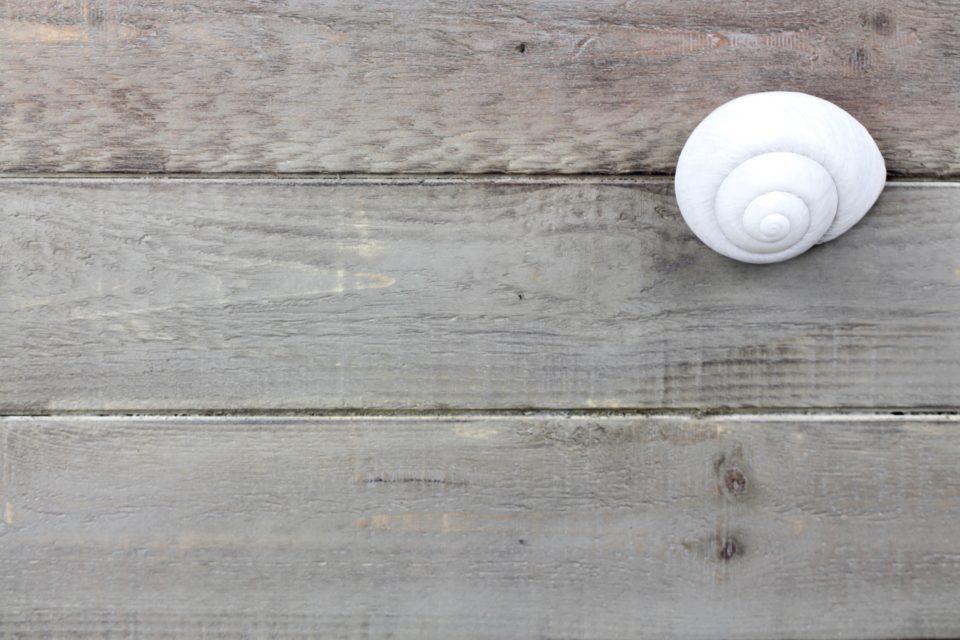 flatlay summer seashell wooden planks