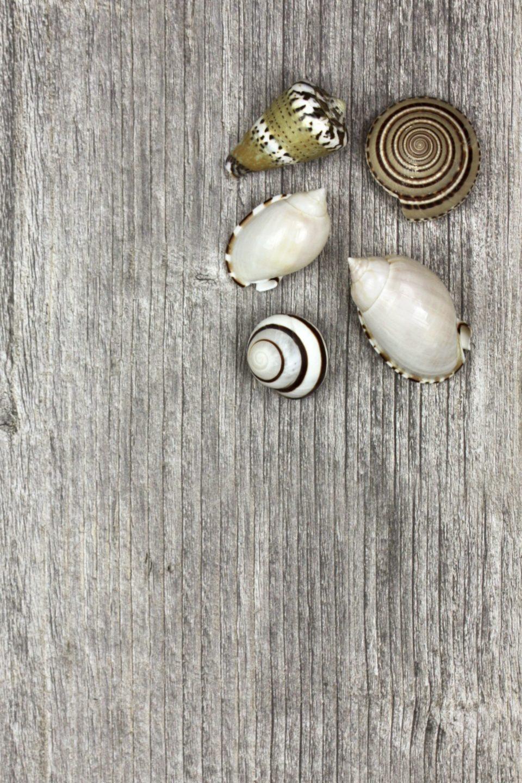 flatlay seashells summer wood