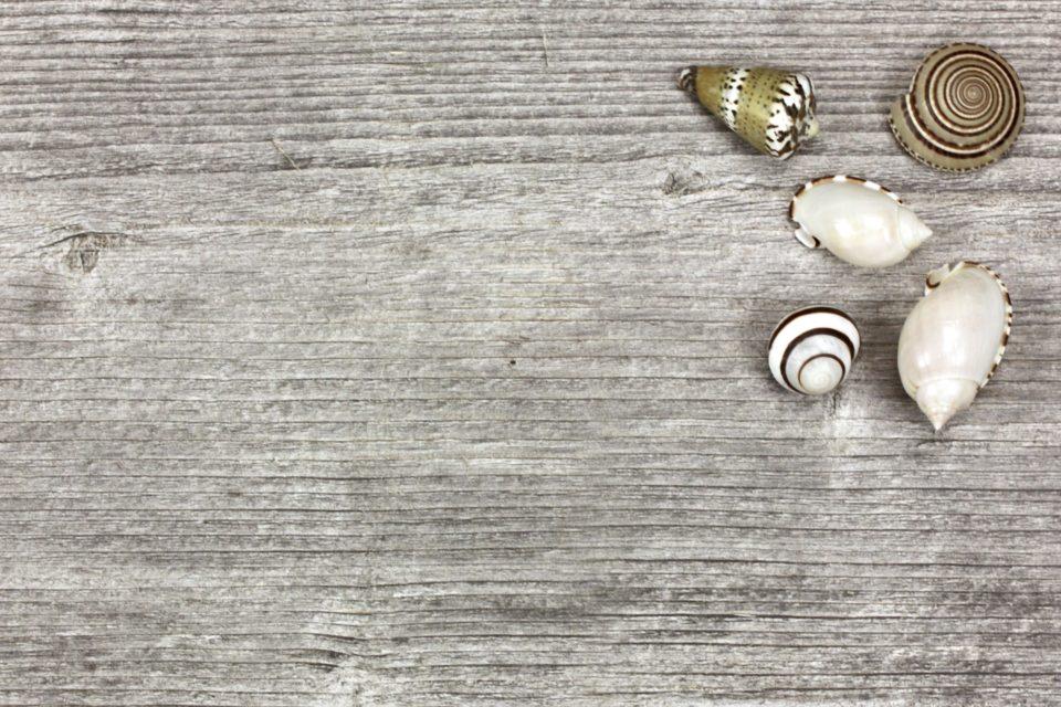 flatlay summer seashells wood