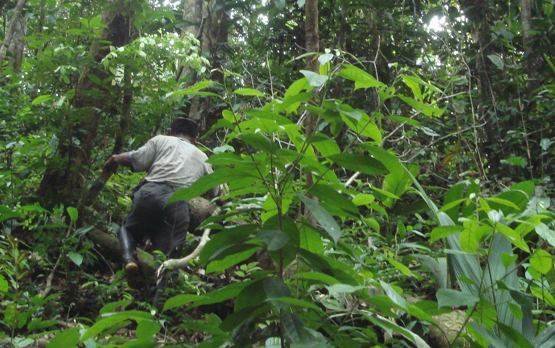 Samuria Anbaugebiet im Amazonas