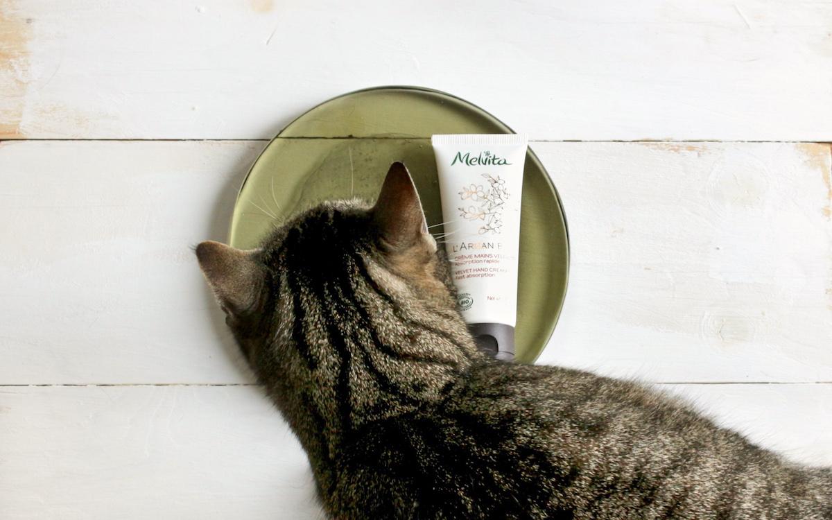 Foto Fail: Katze im Flatlay